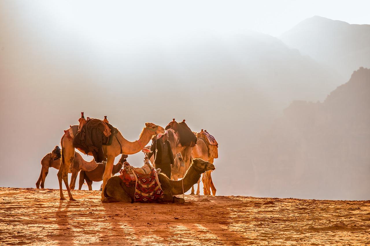 Dream Meaning of Camel - Dream Interpretations Dictionary